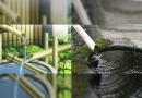 Japanisches Wasserspiel – Was ist das eigentlich?